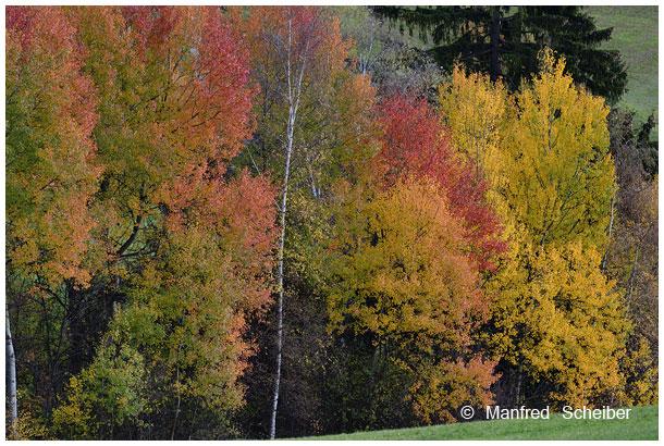Mehr auf http://naturpur.wordpress.com
